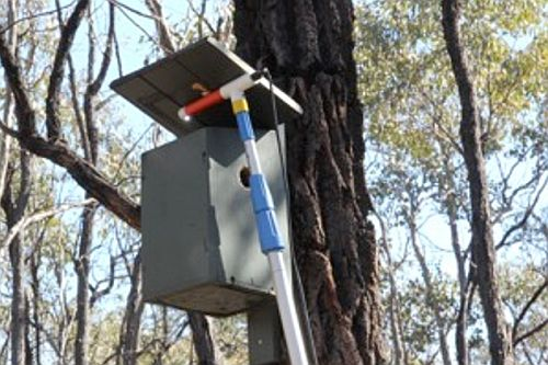 Bendigo Field Naturalists Club nest box monitoring