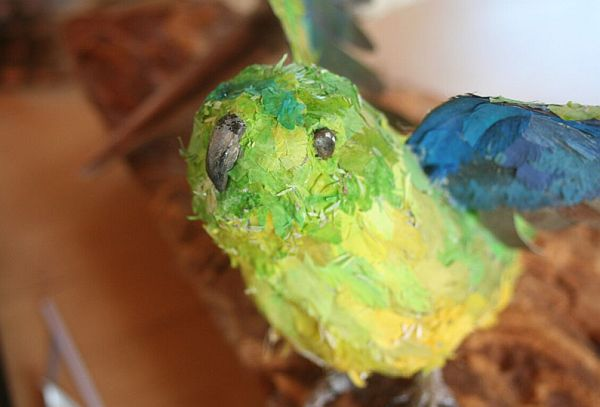 Now You See Us biodiversity art Orange-bellied Parrot