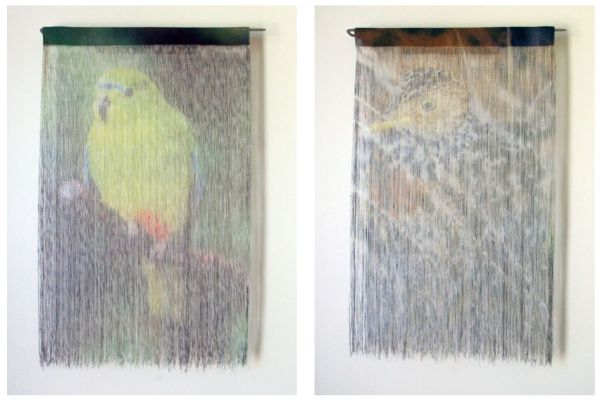orang-bellied parrot Jane Burns