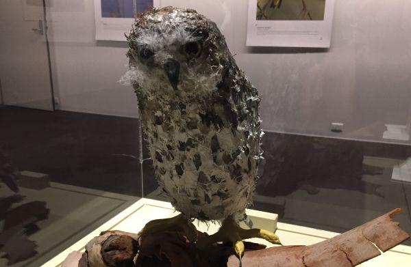 Barking Owl Artist Mary-Jane Walker