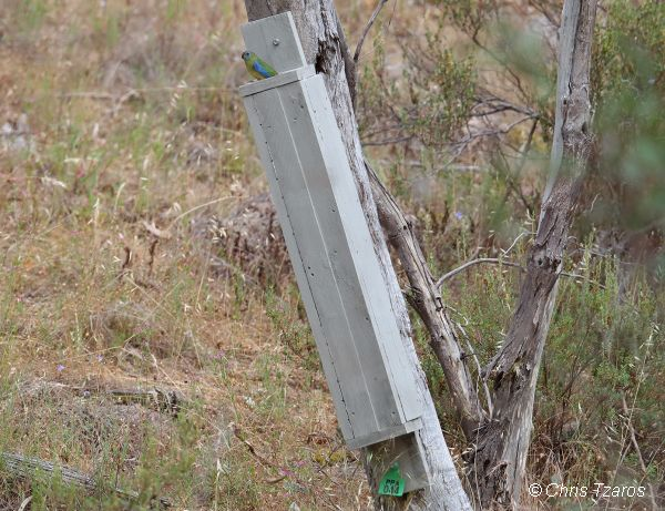Turquoise Parrot nest box. Part of the �Practical Parrot Action� project. Goulburn Broken Catchment Management Authority