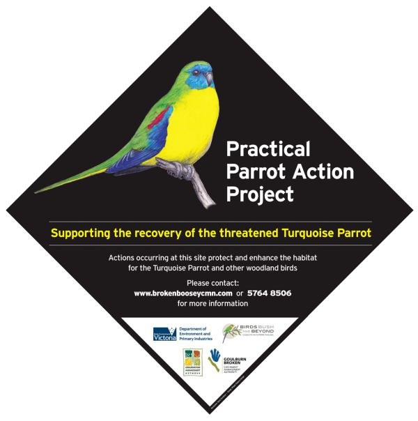 Turquoise Parrot - Practical Action Project. GBCMA