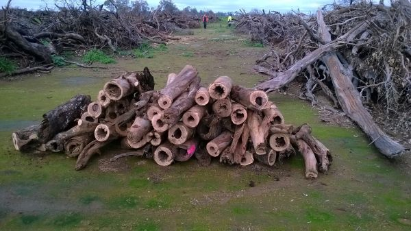 Turquoise Parrot project hollow logs salvaged from bushfire �clean up� area. Source: GBCMA
