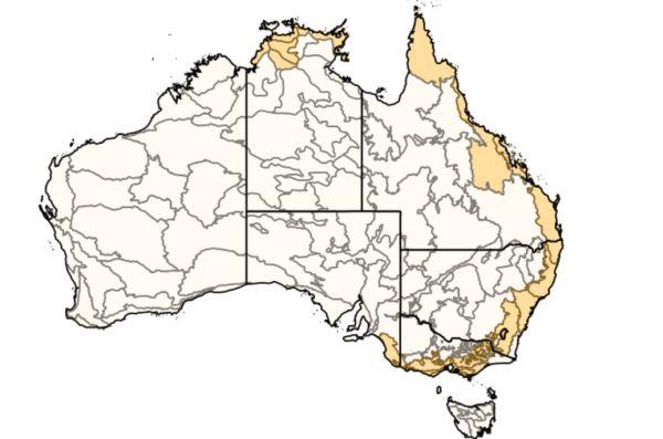 King Quail Australian Faunal Directory