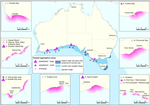 Aggregations of Southern Right Whales in Australia
