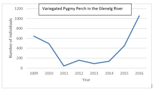 variegated pygmy perch environmental flows