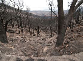 CSIRO burnt area 277 205
