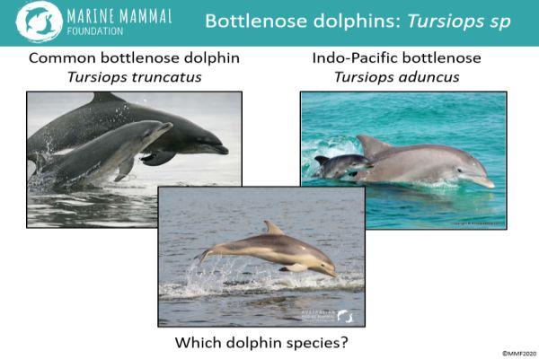 Marine Mammal Foundation presentation to SWIFFT seminar 13 February 2020