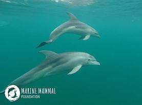 Marine Mammal Foundation ntro
