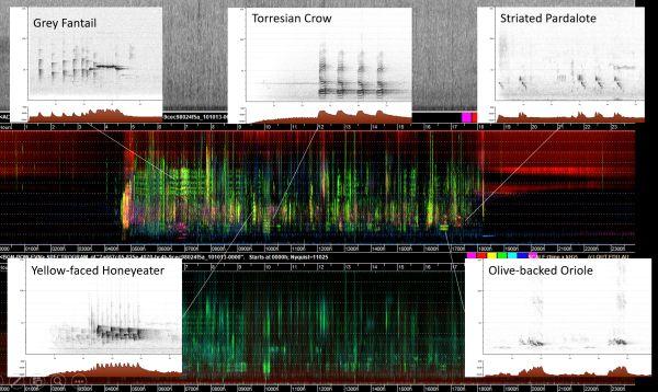 Watson 1a species in spectrogram in talk to SWIFFT 23 April 2020