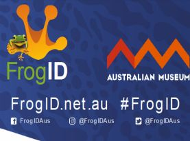Frog ID  intro