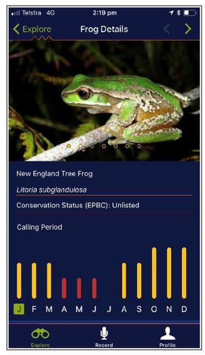 Frog ID 1