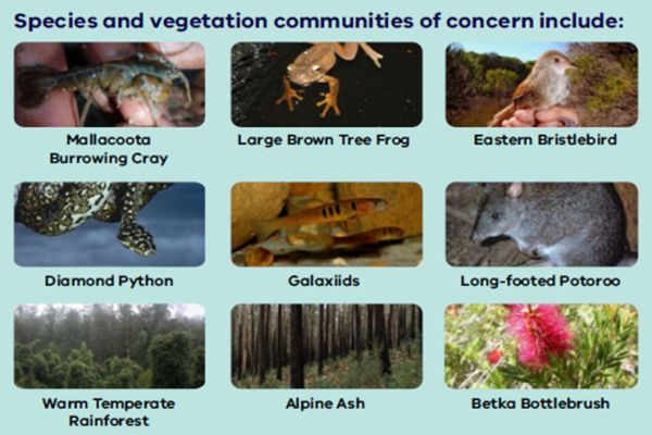 Fahey 1 2 priority species -  in talk to SWIFFT 26 March 2020