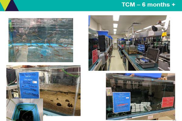 Tarmo Raadik 5 aquarium facilities - in talk to SWIFFT 26 March 2020