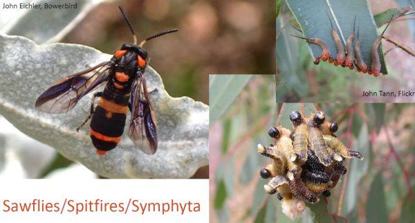 Wasps talk 1