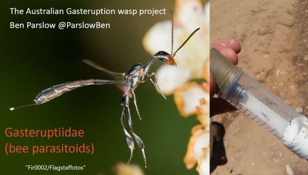 wasp talk 3