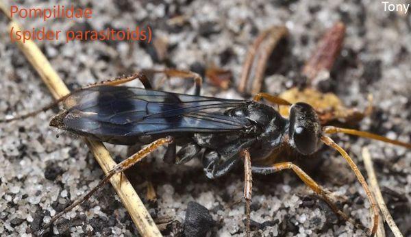 wasp talk 4