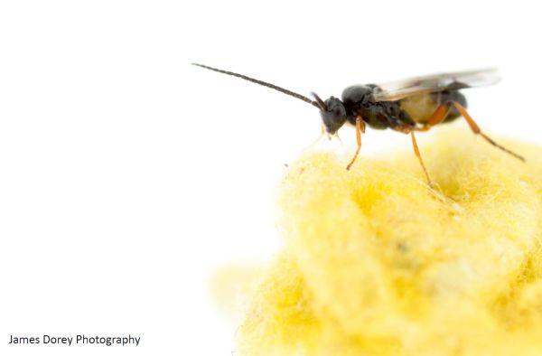 wasp talk 6