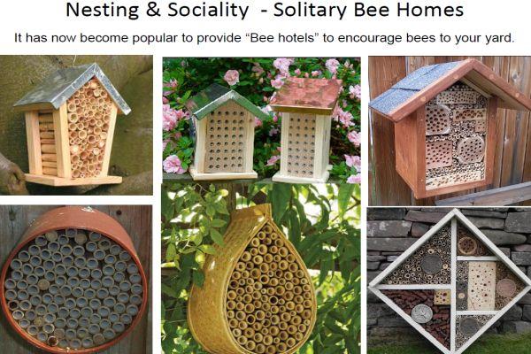 Walker bees 10 bee hotel
