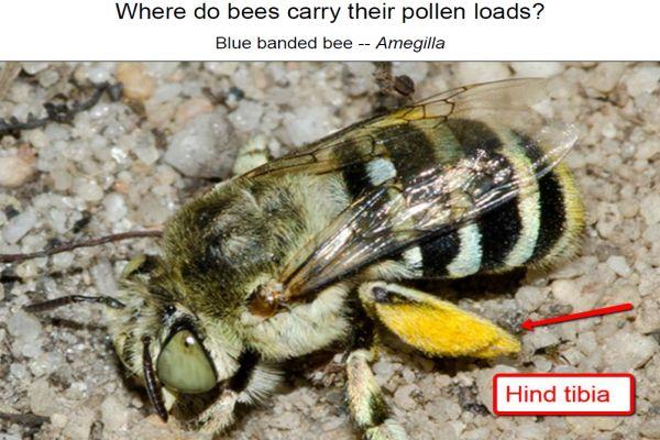 Walker bees 4