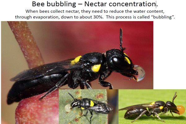 Walker bees 7 bubbling