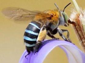 Walker into bees
