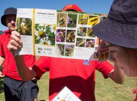 wild pollinator count intro