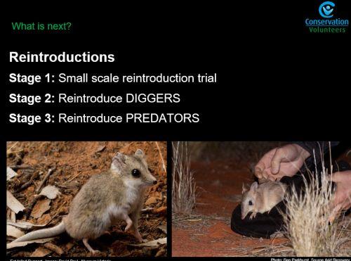 Rewilding the desert project Ben Holmes, Reintroductions