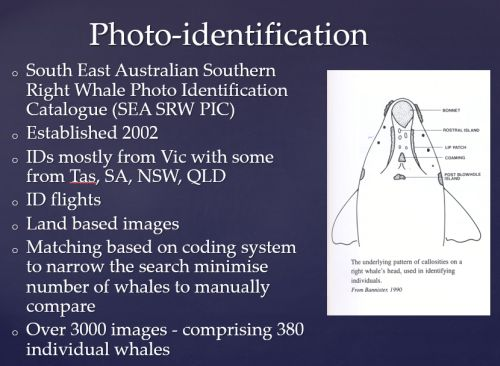 Watson 3 video conf notes 1 Feb 2018 Southern Right Whale ID