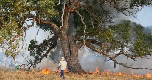intro red gum grass burn at Teesdale