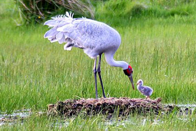 Brolga Research