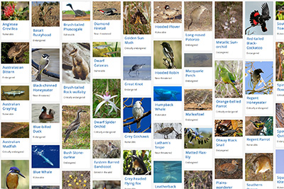 Threatened species profiles